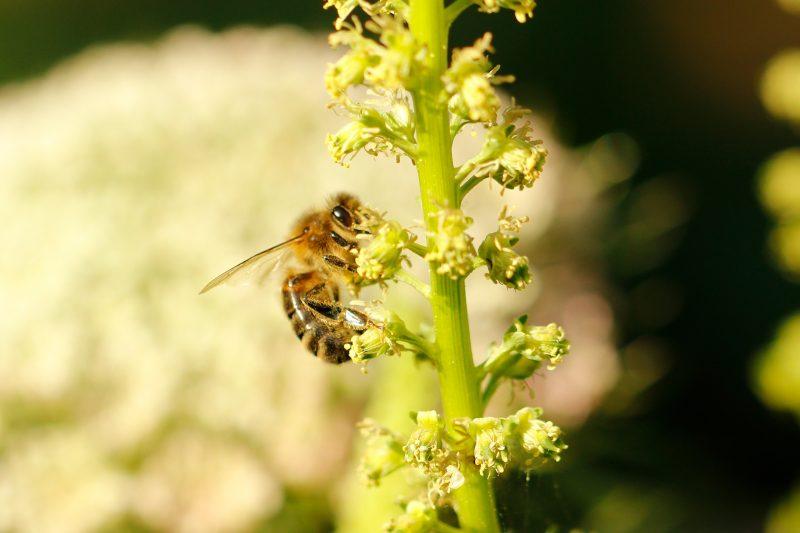 honey bee on Weld